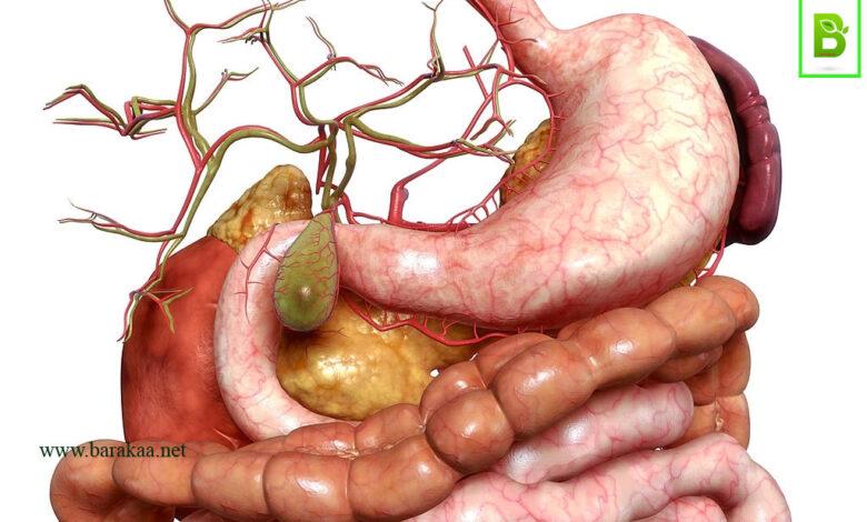 علاج التهاب فم المعدة بالاعشاب تخلص من التهابات فم المعدة بطرق طبيعية بالمنزل